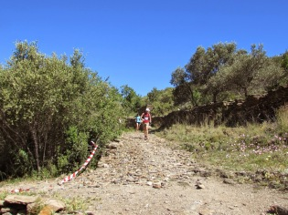 Trail CAP DE CREUS (31)